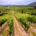 Carménère World Class Chilean Wine